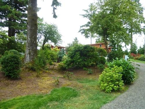 looking east through the rhody groves