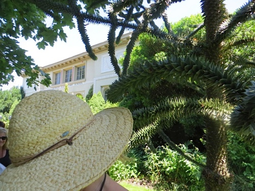 sun hat and monkey tree