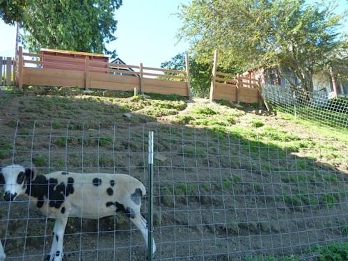 a hillside pasture for city goats!