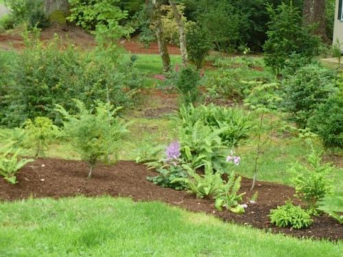 8, the holly/fern grove