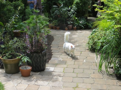 and a greeter to the busier garden near the back of the house