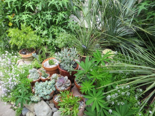 detailed plantings
