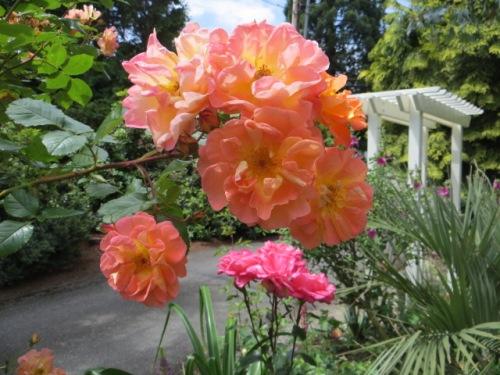 into the front garden