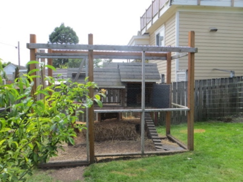 chicken coop in back yard