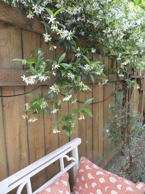 overhung with fragrance (jasmine?)
