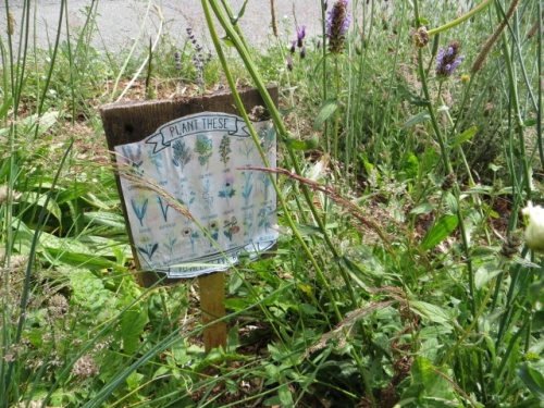 with list of bee friendly plants