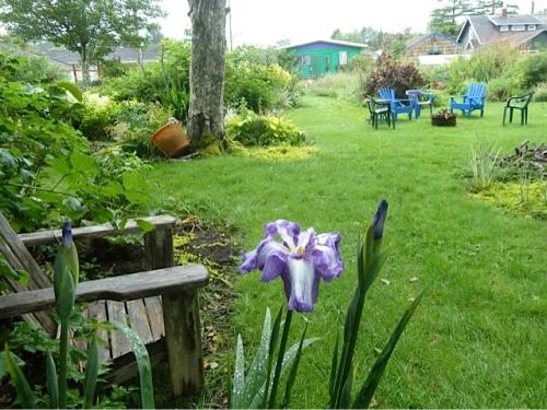soggy Japanese iris