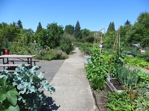 kitchen garden, I would imagine it supplies the restaurant