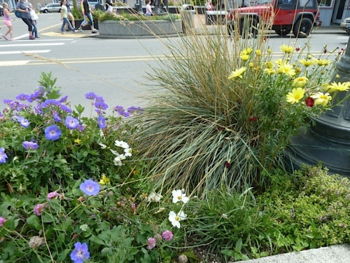 The planter closest to the Long Beach Tavern had been sat upon or otherwise somehow thrashed.