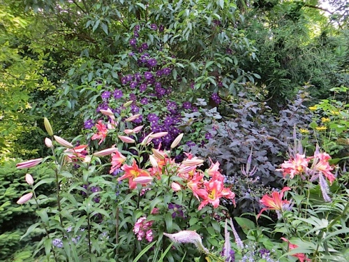 lilies and clematis
