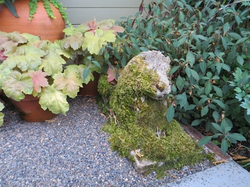 mossy lion by the neighbour door