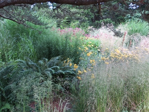 mixed flowers, ferns and grasses