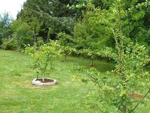 An orchard on the north side of the garden