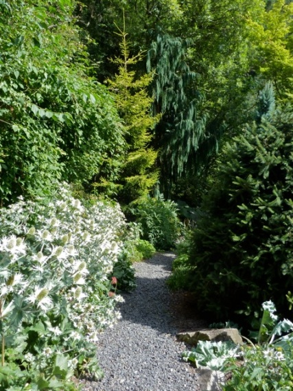 path with Eryngium giganteum, Allan's photo