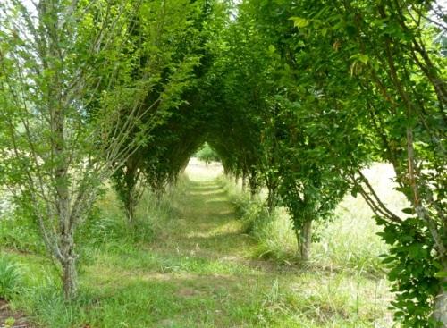 a mown path