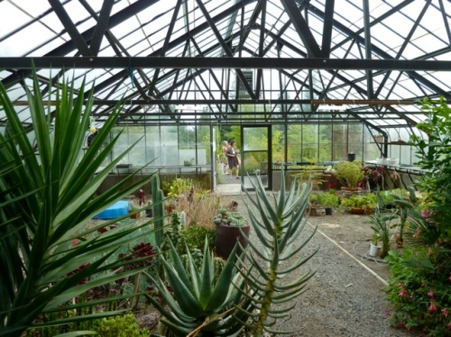 inside the greenhouse atop the hill