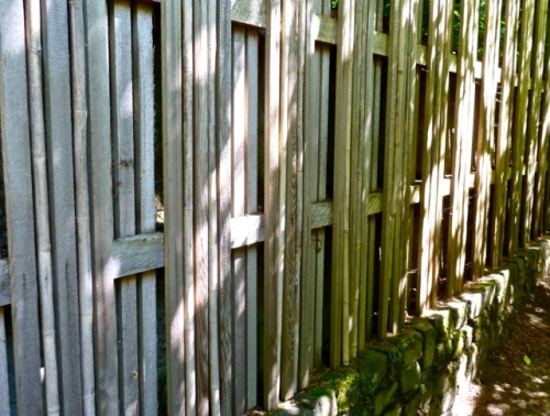 with a privacy fence