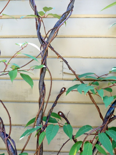 method of attaching vine to wall