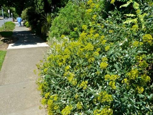 leaving the McMenamins garden