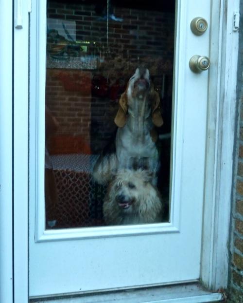 back door: adorable!