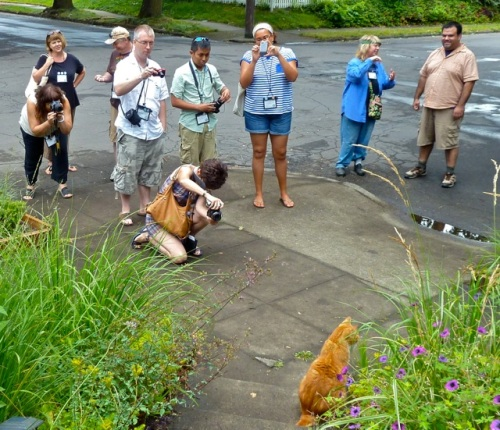 Allan's photo: cat admiration society