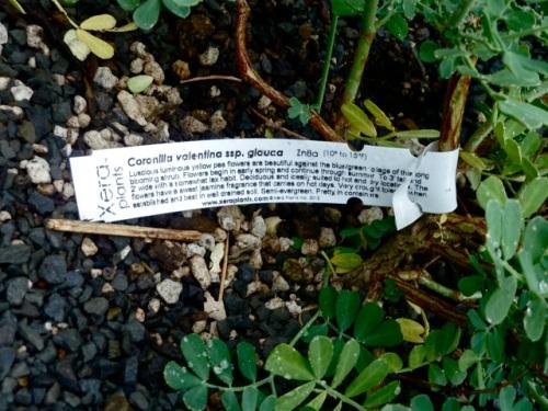 Xera plant tag