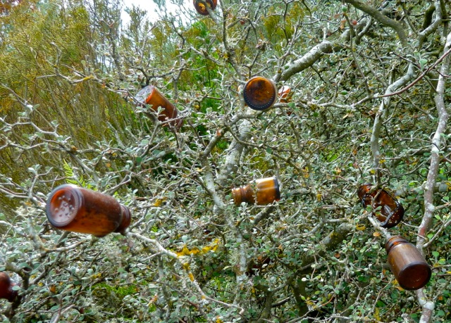 and the brown bottle tree.