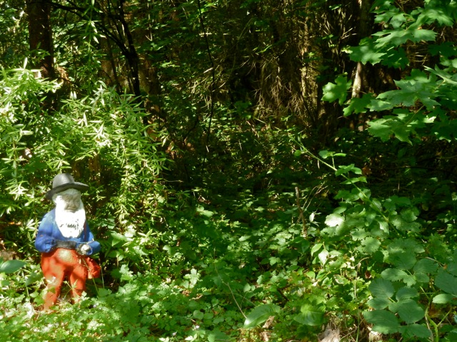 the gnome woods