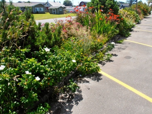 a before photo of the weedy parking lot berm