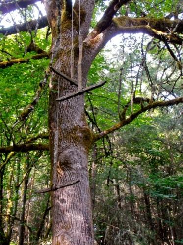 danger tree?