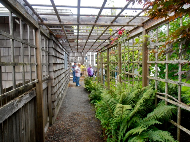 Allan's photo, looking into the garden from the arbour that leads from the side gate to the back deck