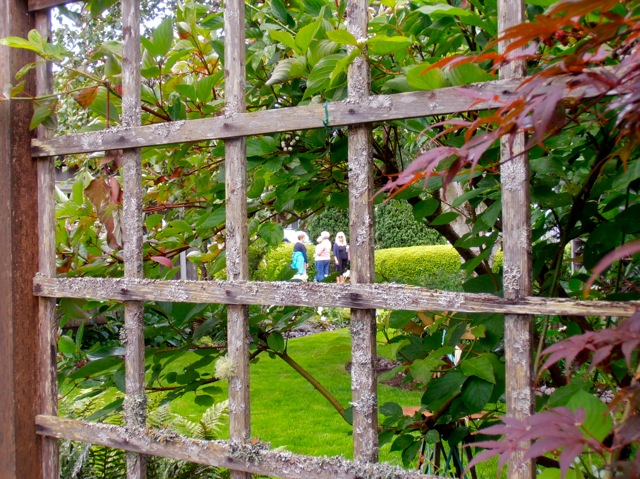 looking through the lattice to the north side lawn