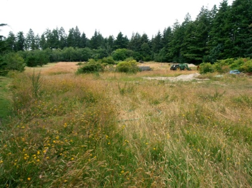 Allan got this photo of the meadow where once upon a time potted plants for sale were displayed.
