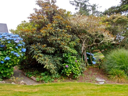 The garden was established years ago so its shrubs and trees are mature.