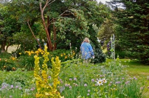 Allan's photo, looking northwest over the kitchen garden