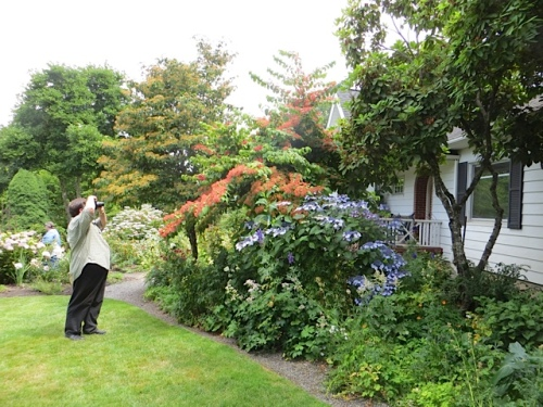 Near the house, Peter (Outlaw Gardener) photographs a viburnum.