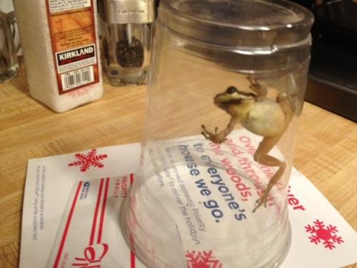 Allan caught it in a jar...