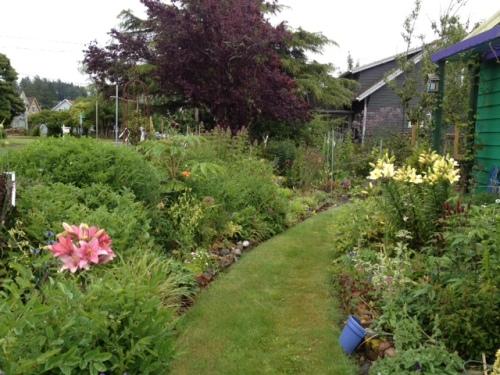 I hadn't seen much of my garden....