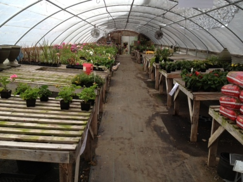 The annuals house at the Basket Case was almost empty!  I did get some good perennials.
