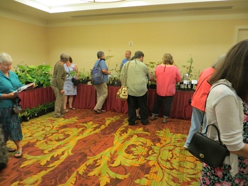 plant sales room with three excellent vendors