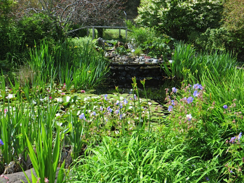 the pond on a pre-tour visit, June 4