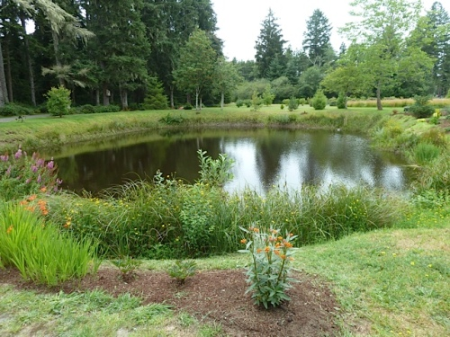 north side of pond (garden area 11)