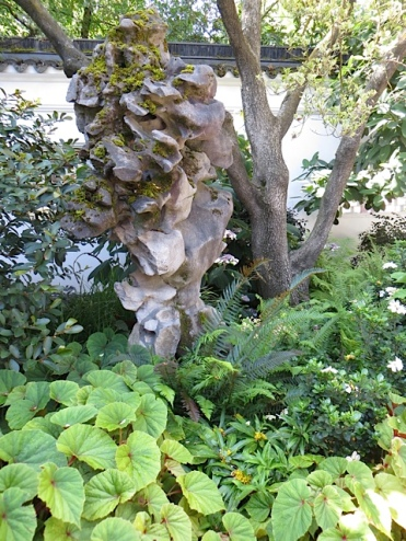 Throughout the garden are sculptural stones from China.