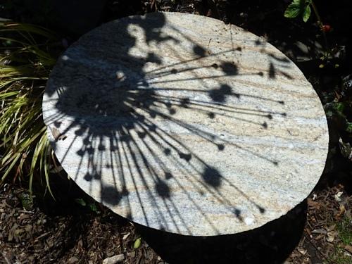 allium shadow