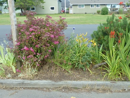 assorted shrubs