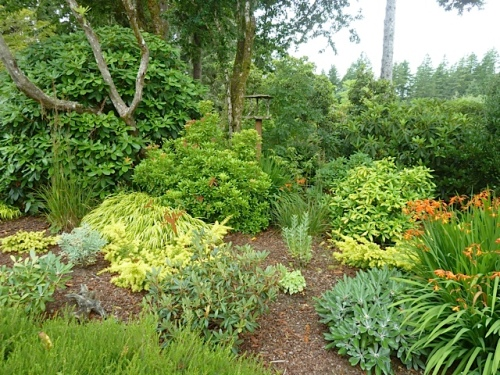 young trees and shrubs intermingle with established shrubs from the old nursery that was here.