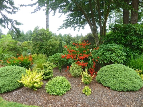 lots of gold foliage glowing in the mixed borders