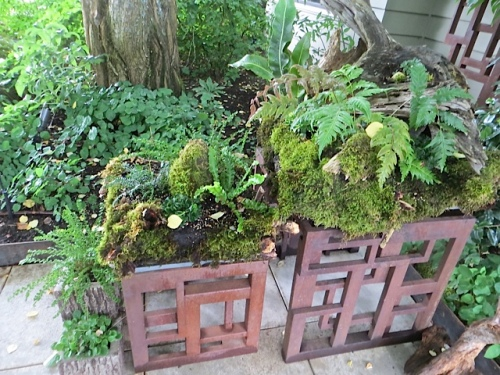 I suggested to Allan that he do something like this to squeeze more ferns into his garden.