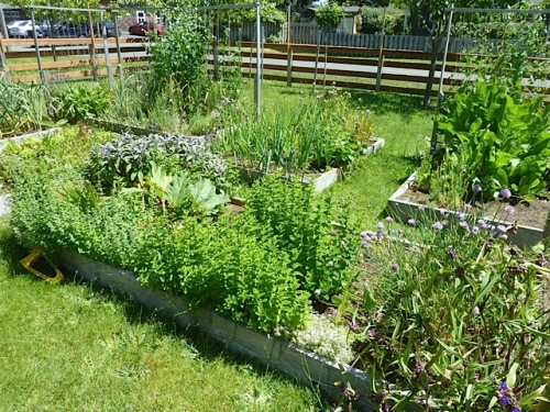 a peek at Nancy's veg garden