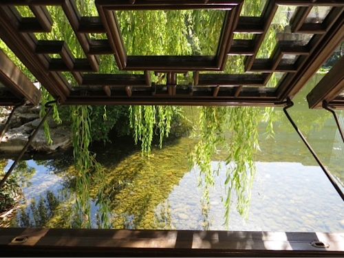 window, water, weeping willow